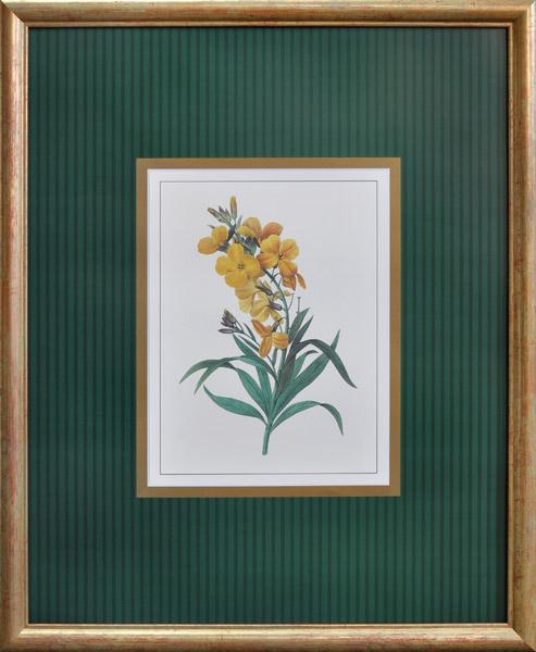 ботаніка XVIII